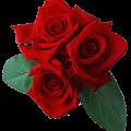 Про троянди